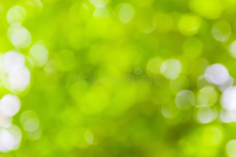 Green bokeh natural color abstract blurred background Warm leaf of tree and bright summer sunlight.  stock image