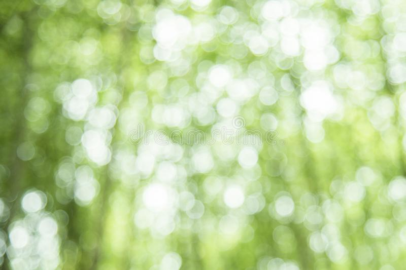 Green bokeh on nature defocus abstract background.blur green bokeh from bamboo forest stock image
