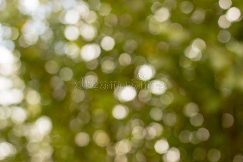 Green bokeh out of focus stock images