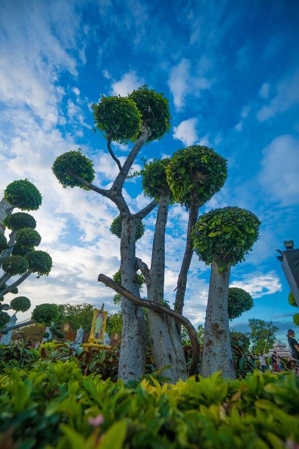 Green bonsai trees gardens in Wat Arun, Bangkok royalty free stock photo