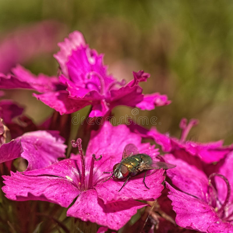 Download Green Bottle On Pink Flowers Stock Image - Image of arthropoda, canada: 55165233