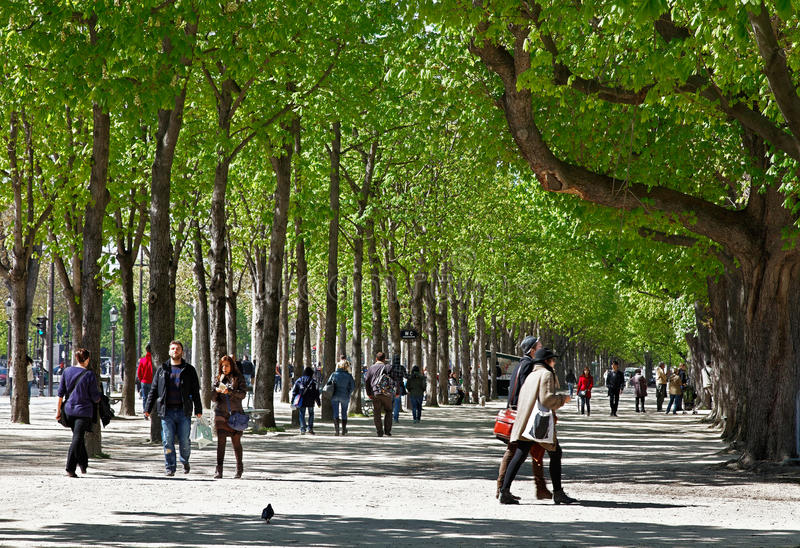 Download Green Boulevard editorial stock image. Image of footpath - 24319549