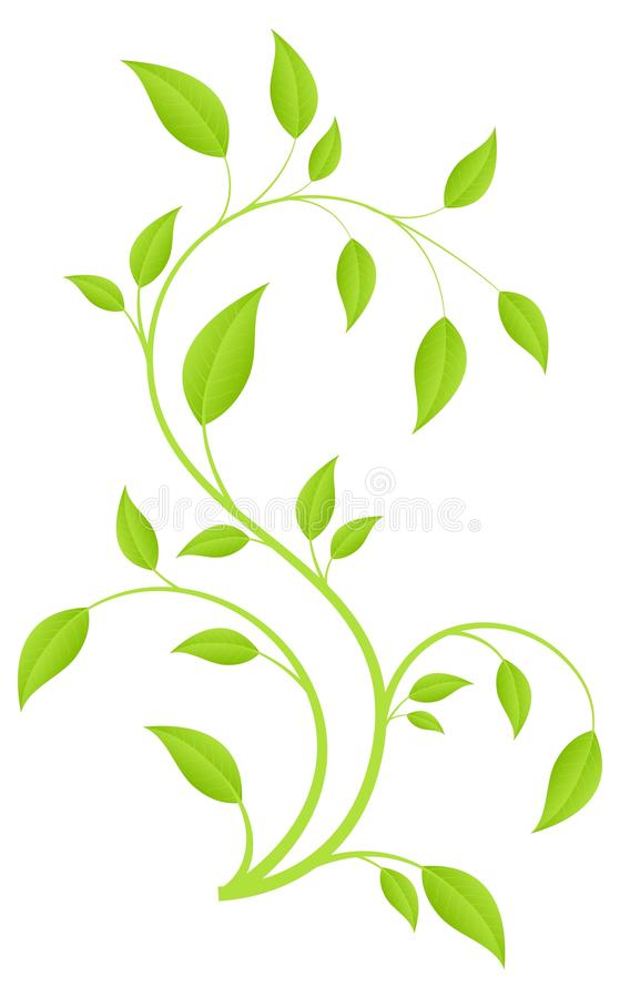 Green branch. Green fresh plant, young sapling. Vector illustration, isolated on a white