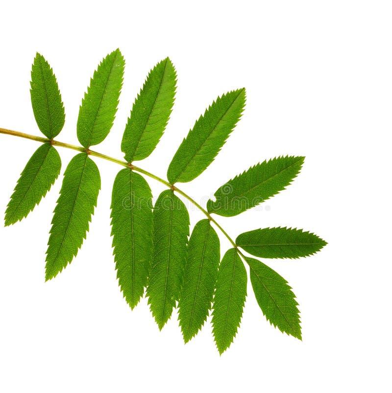 Green branch stock photos