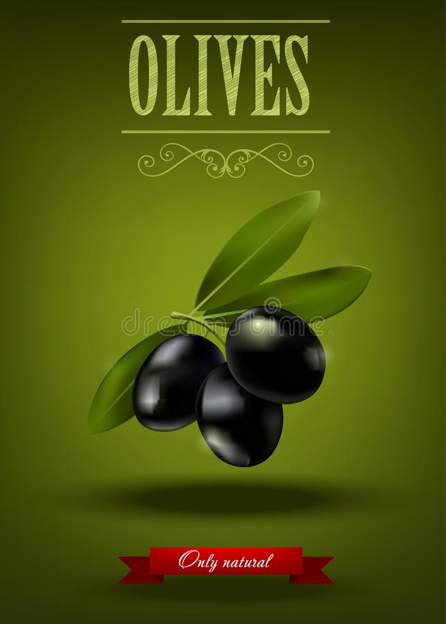 Green branch of black olives, realistic olives, vector illustration, green olive label stock illustration