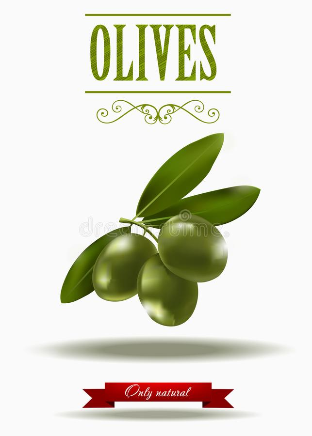 Green branch of black olives, realistic olives, vector illustration, green olive label royalty free illustration