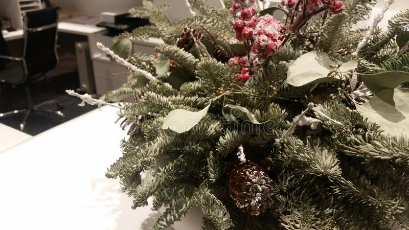 Green branch a fir-tree with a red mountain ash with the snow in an interior. stock image
