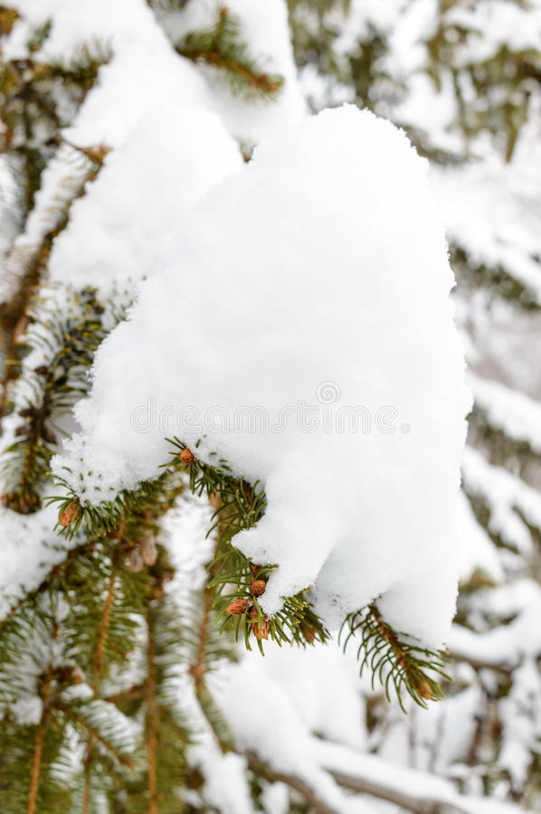 Green branch of fir under the snow cap. Winter landscape stock image