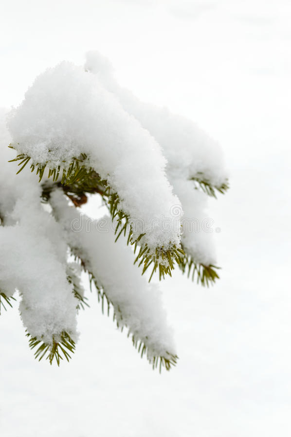 Green branch of fir under the snow cap. Winter landscape stock photo