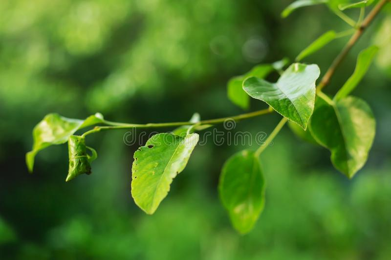 Green branch symbol of summer stock photography