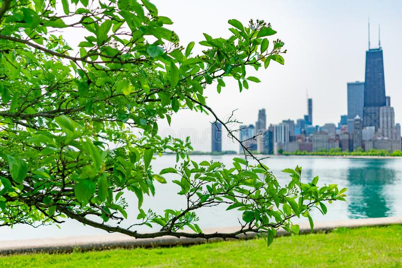 Green Branch from a Tree at North Avenue Beach and the Chicago Skyline royalty free stock image
