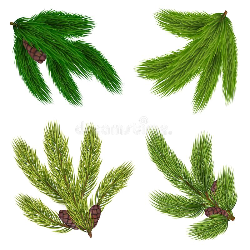 Green Branches Of Coniferous Trees Collection vector illustration