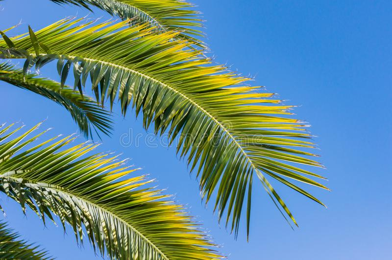 Green branches of palm trees on the background of  blue sky - background and leisure concept stock images