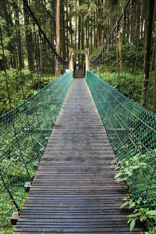 The green bridge in forest Alishan at taiwan stock photo