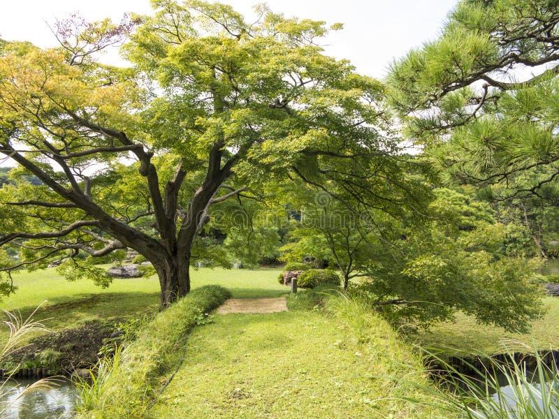 Green bridge in Riykugien Garden, Tokyo royalty free stock photos