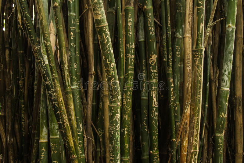 Green And Brown Bamboo Trees Free Public Domain Cc0 Image