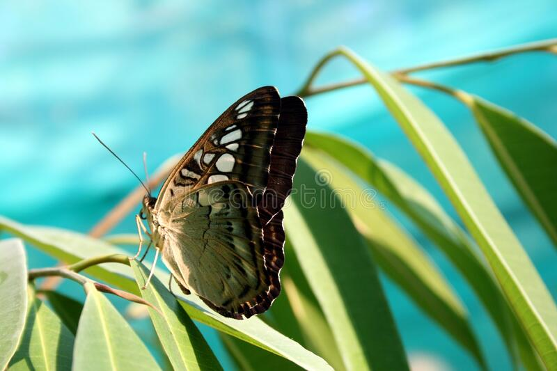 Green Brown Butterfly royalty free stock photos
