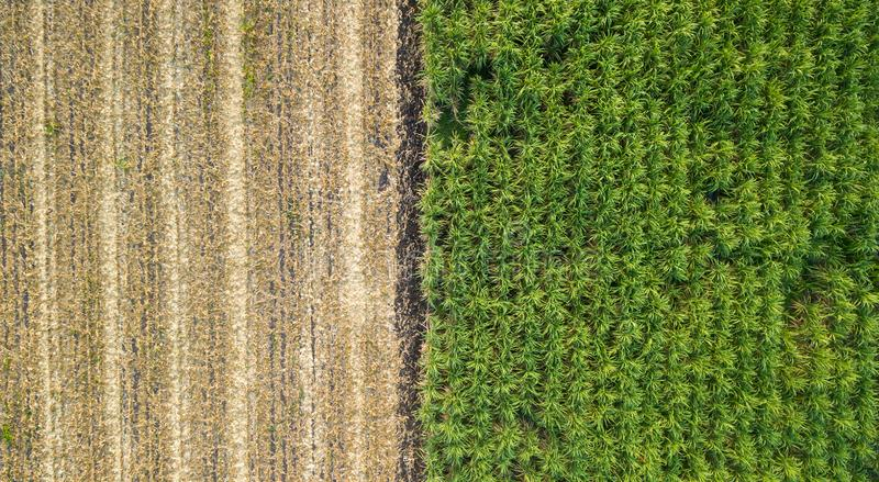 Green and brown field divided in half. Aerial view rows of soil before planting.Sugar cane farm pattern in a plowed field prepared royalty free stock photos