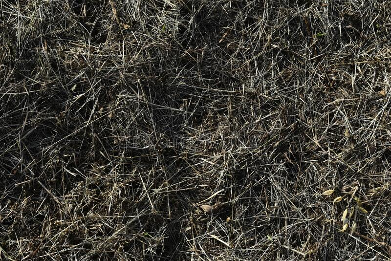 Green and brown grass and grass from above.  stock photos