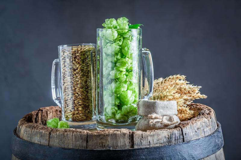 Green and brown malt and hop as ingredients for beer royalty free stock photo