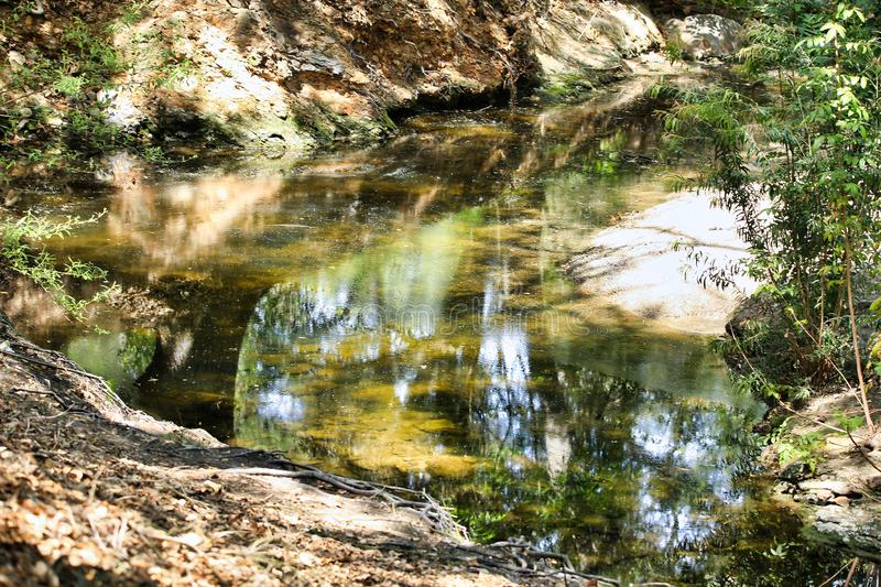 Woods pond summer reflections stock image