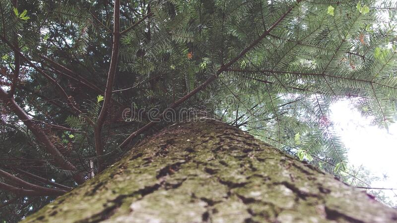 Green and Brown Tree Under White Sky during Daytime royalty free stock image