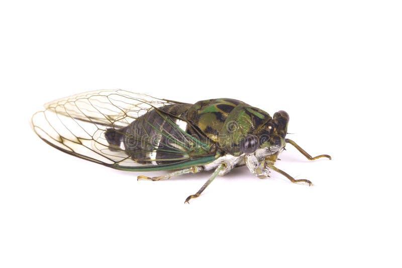 Download Green bug. stock image. Image of entomology, green, face - 16146573