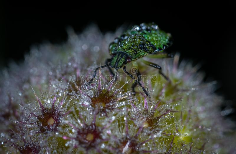 Green Bug on Flower Macro Photography stock photo