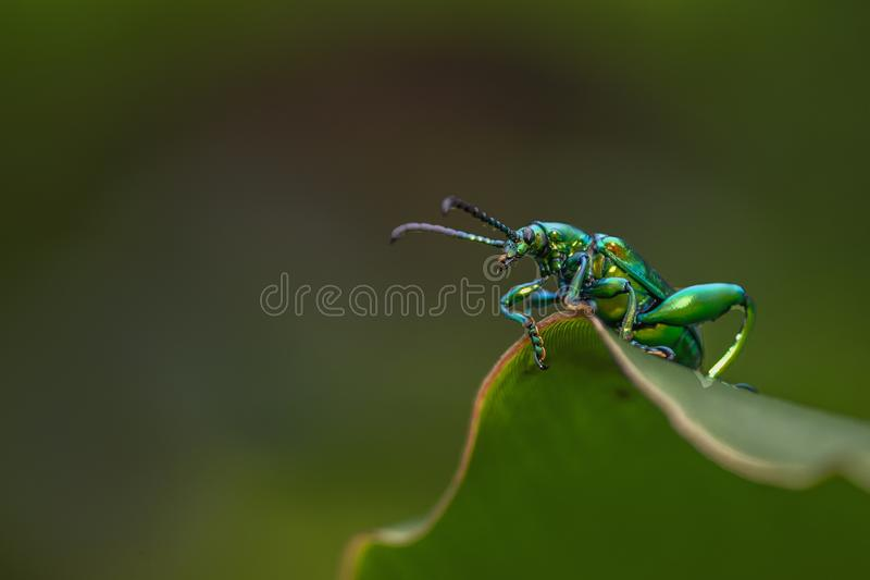 A Green Bug royalty free stock photo