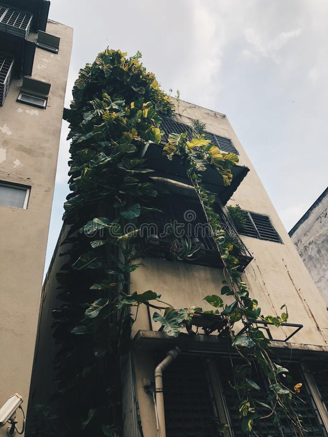 Green in building royalty free stock image