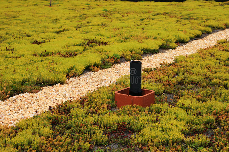Green building roof. Covered with flowering sedum plants royalty free stock photo