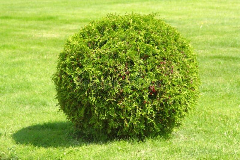 Green bush stock images
