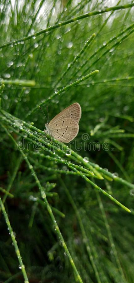 Green bush butterfly rain droplets cloudy weather royalty free stock photography
