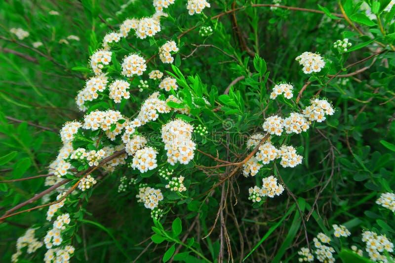 Green bush stock photography