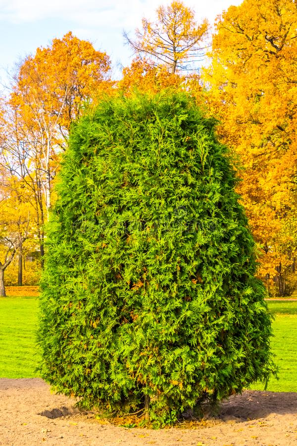 Green bush stock image