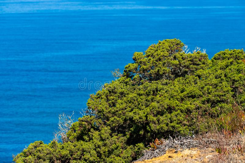 Green bush on the rock on sea coast. Selective focus on the bush. With shallow depth of field. Landscape with a bush on the. Background of the seascape, grass stock images