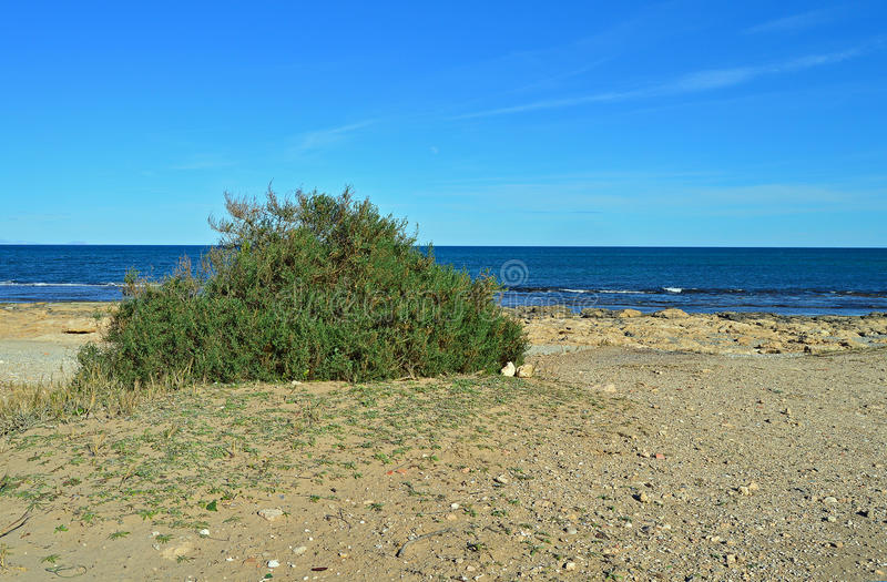 A Green Bush on A Sandy Beach stock photo