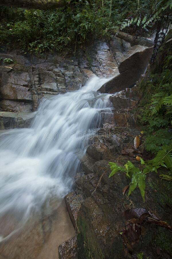 Green Bush in Water Fall stock image