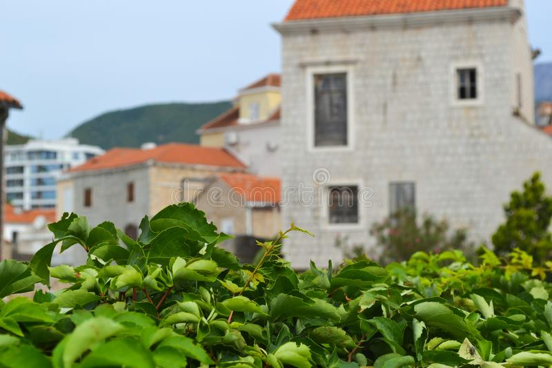 Green bushes in the foreground. Defocused ancient buildings with a red tiled roof. Old Town. Budva. Montenegro. Green bushes in the foreground. Defocused royalty free stock photography
