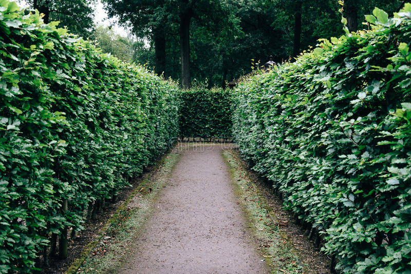 Green bushes labyrinth, hedge maze stock images