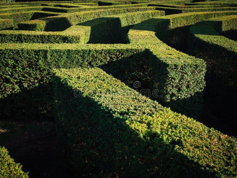 Green Bushes Labyrinth, Landscape Gardening Design Stock Photo ... on spiral labyrinth garden, labyrinth herb garden, labyrinth garden kit, lavender labyrinth garden, labyrinth flower garden, labyrinth meditation garden, labyrinth garden designs, spiritual labyrinth garden,