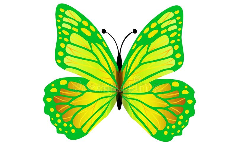 Green butterfly flying isolated on white background. Illustration design stock photography
