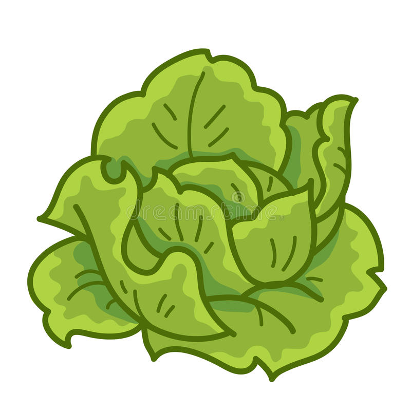 Download Green cabbage stock vector. Image of drawing, food, icon - 32108837