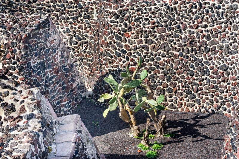 Green Cactus Ancient Walls Aztec Templo Mayor Mexico City Mexico stock images