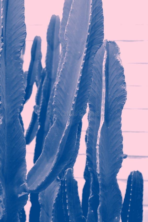 Green Cactus Closeup royalty free stock images