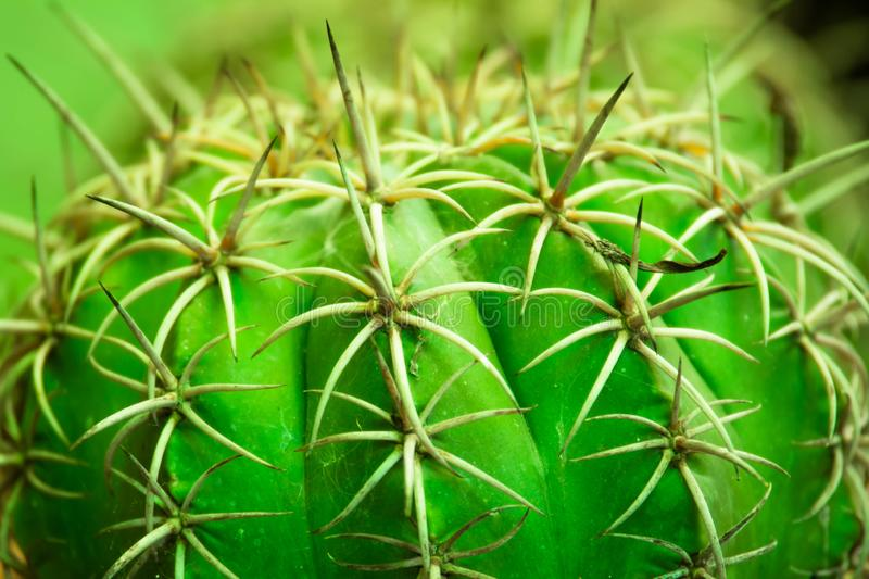 Green cactus in the garden royalty free stock images