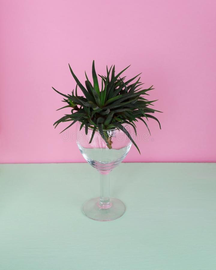 Green cactus in a glass on a colorful background. Cactus Fashion Design. Minimal fashion Stillife. Trendy Bright Colors. Green cactus in a glass on a colorful stock photography