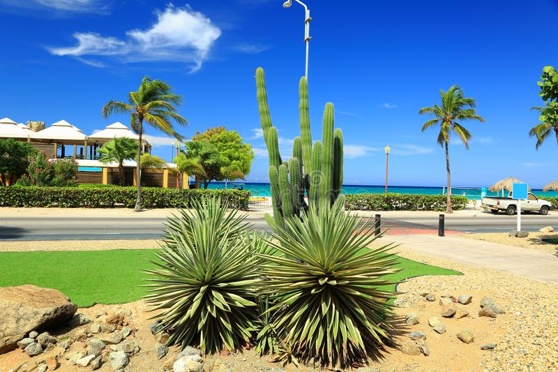 Green cactus and palm trees on blue sky background. Aruba island royalty free stock images