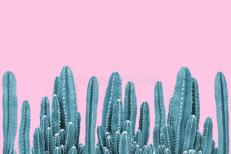 Green cactus on pink background stock photo