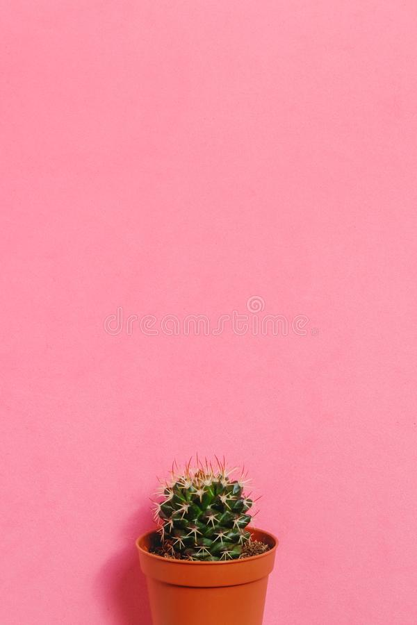 Green Cactus In Pot On Pink Pastel Color Background Minimal Concept - Best of flower powerpoint background concept